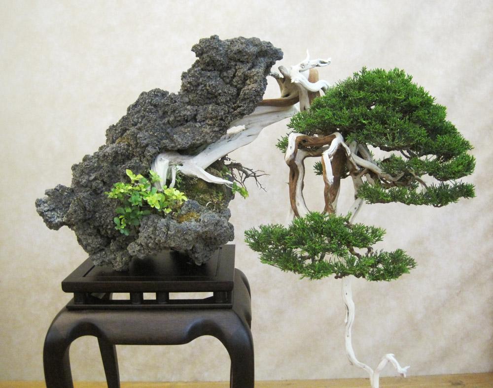 Bonsai friends bonsai yamadori from tony tickle for Bonsai italia