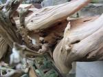 deadwood (3)