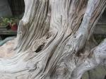 deadwood (5)
