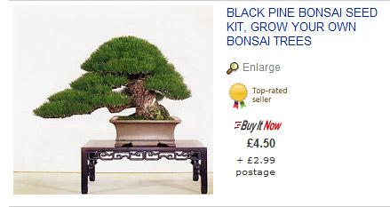 Ebay bonsai yamadori from tony tickle for Most expensive bonsai tree ever