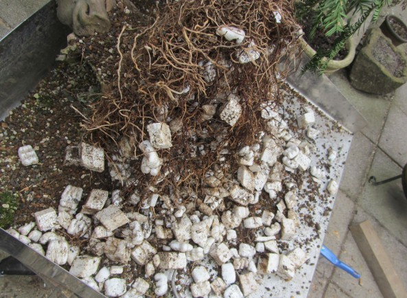 Polystyrene in pots 2