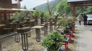 Mireks garden