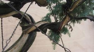 Juniperus Communis 04