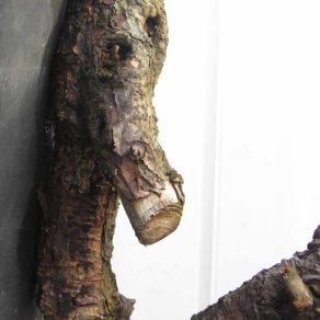 Pine 06
