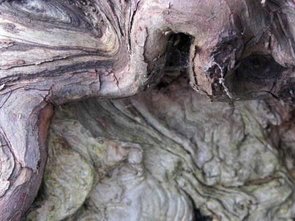 deadwood and live vein
