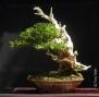Kifu Yew July 2014 1500