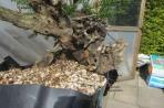 deadwood detail 2