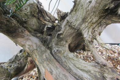deadwood detail 3