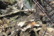 deadwood detail