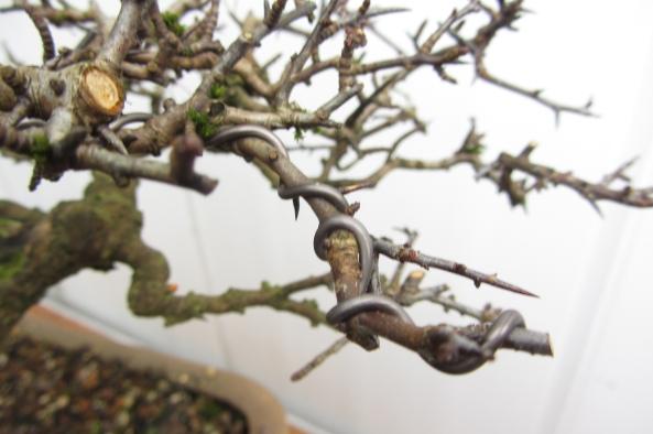 Hawthorn trim Wire