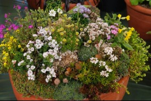 One of John Downes amazing miniature gardens