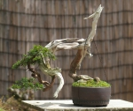In Stone Monkeys pot