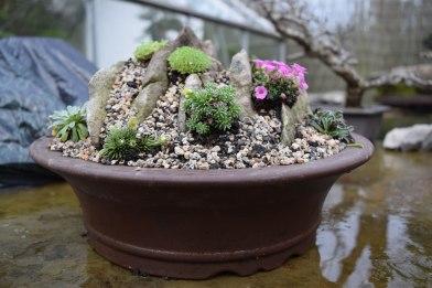 Crevice garden 01