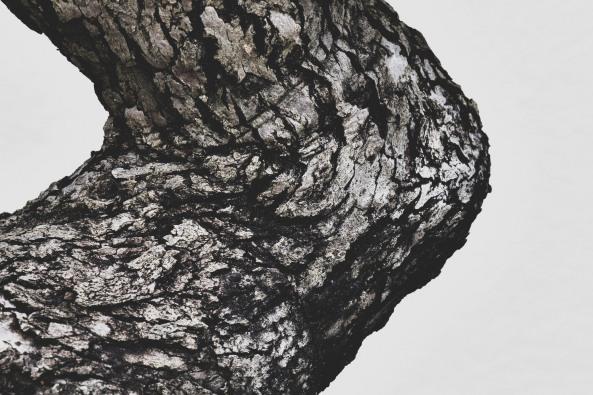 Voss-bonsai002