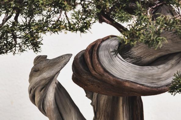 Voss-bonsai003
