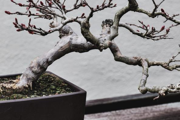 Voss-bonsai004