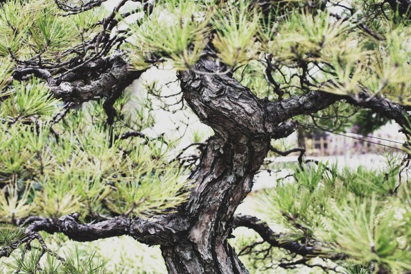 Voss-bonsai007