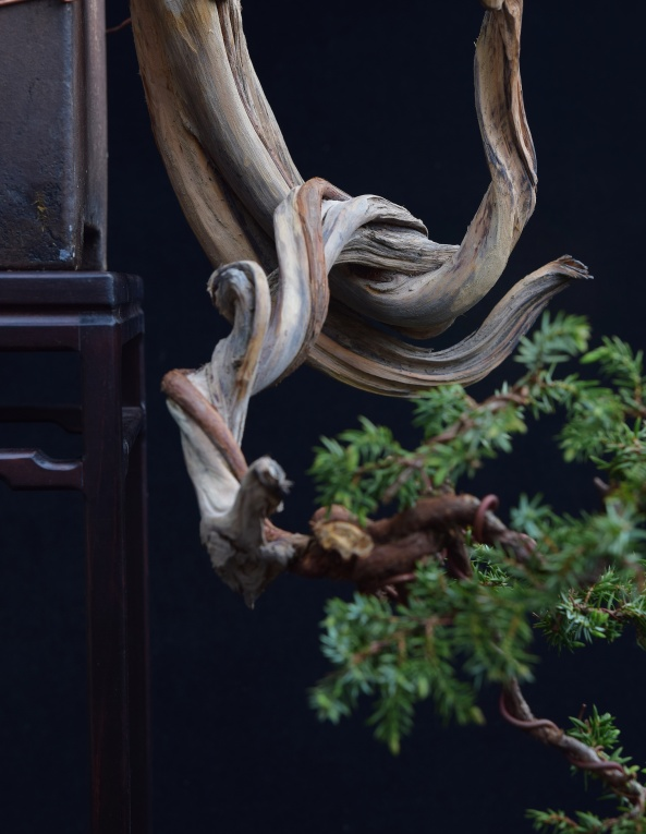 deadwood detail on Juniper