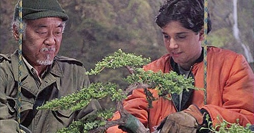 What Kind Of Bonsai Tree Was In Karate Kid