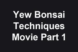 Yew technique Part 1