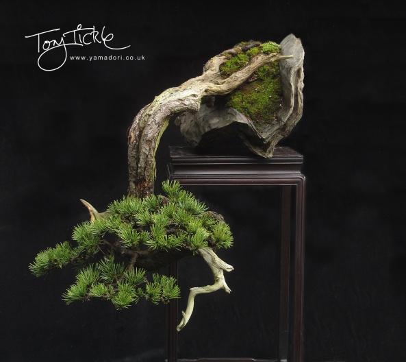 cascade-mugo-pine-fb