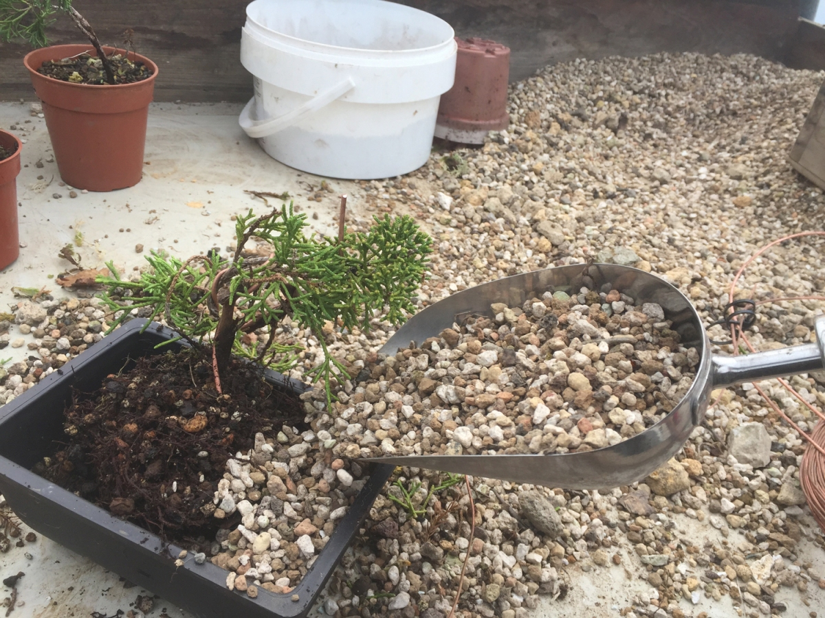 16 open soil mixture bonsai yamadori from tony tickle for What is soil a mixture of